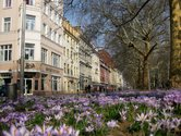 The Hauptstrasse street mall in the spring time